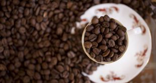 فروش عمده قهوه ویتنام