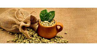 مرکز فروش قهوه سبز